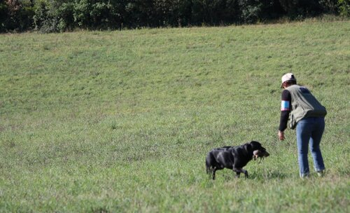 Field Trial Saissac du 18 au 20 septembre 2015