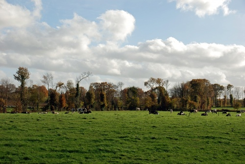 Gourhel et ses alentours en automne.(56800)