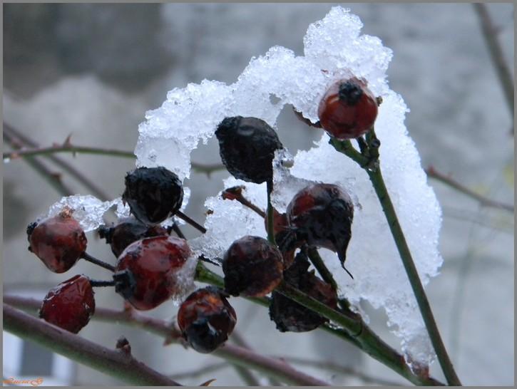 L'hiver s'installe .....