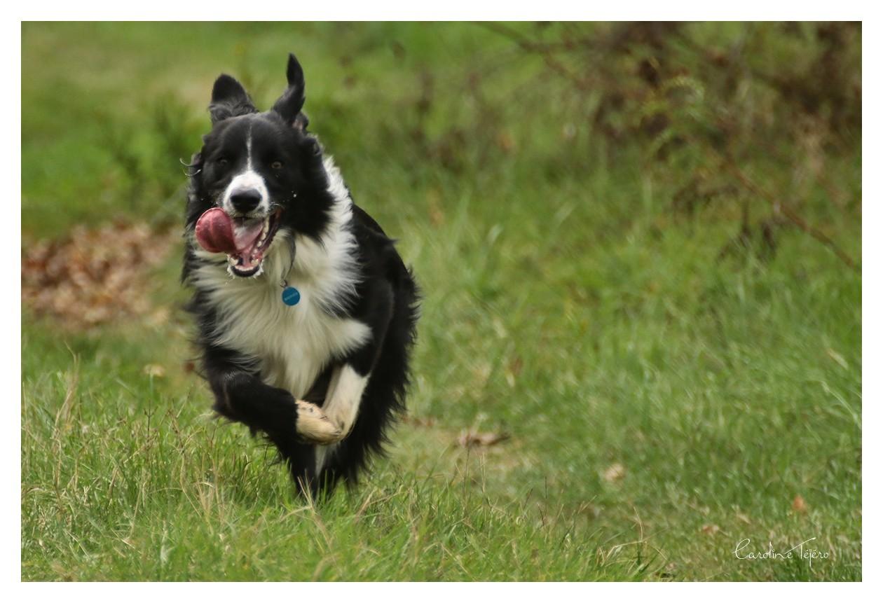 Courir à en perdre haleine