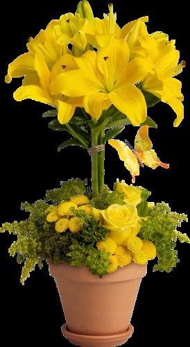 Fleurs en Pots Série 8