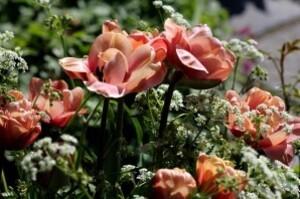 Tulipes Belle époque11