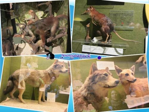 Le musée Zoologique de Strasbourg