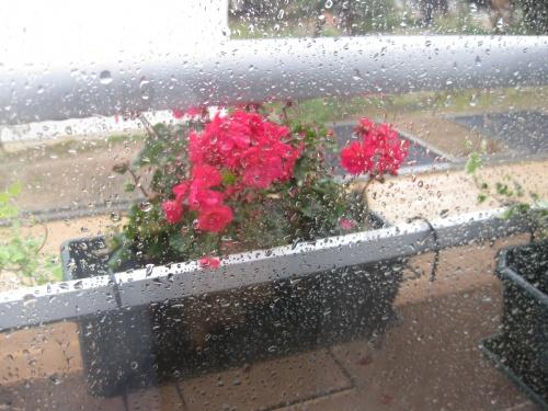 Il pleut !