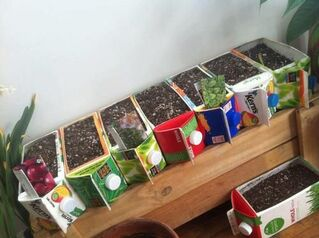 "Brilliant! And a great addition to the ""beverage carton-repurposing"" idea file. Spotted on Facebook, on the Grow Food, Not Lawns community g..."