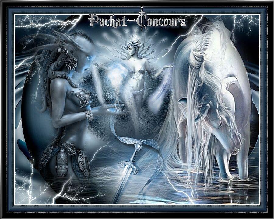 Forum Pacha1