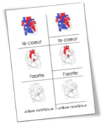 Cartes de nomenclatures