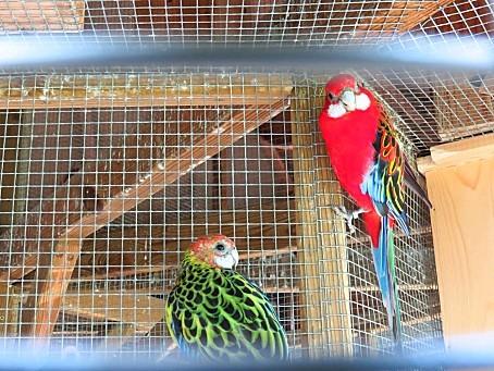 les-oiseaux-et-autres-volatiles-0126.JPG
