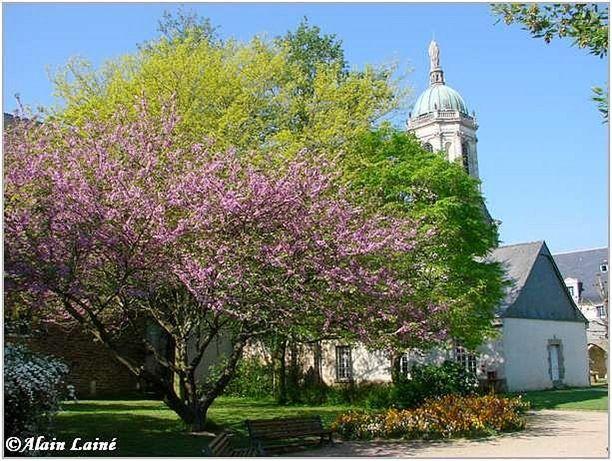 Cloitre St Melaine-Mai08-2