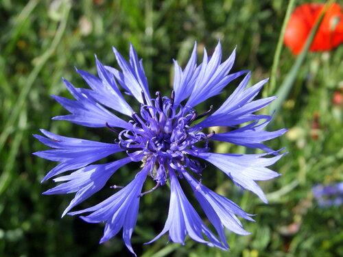 photos fleurs sauvages sylvie le brigant
