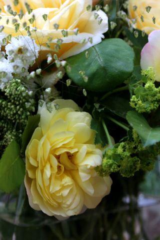 Des compagnes pour mes roses : Briza