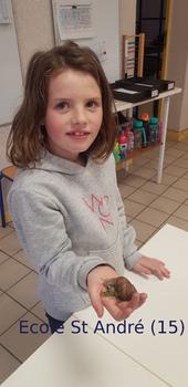 Des escargots dans les classes de maternelle et CE