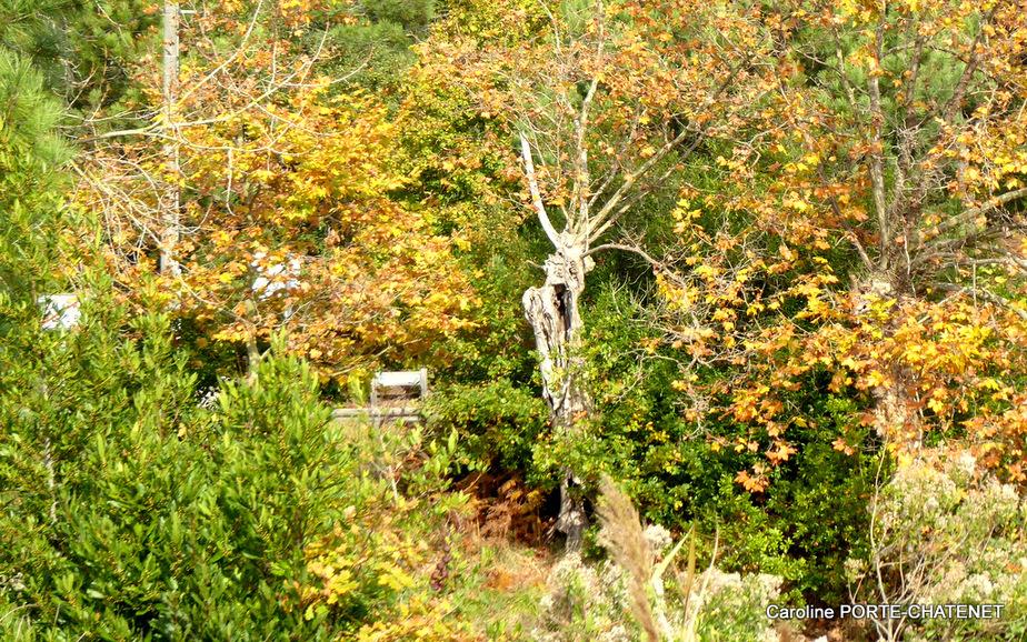 L'automne au Pont des Trounques