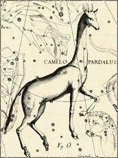 Armure de la Girafe
