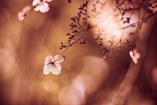 fleur-500x334