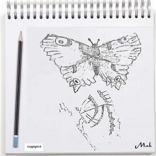 Mon dessin au crayon noir - Papillons