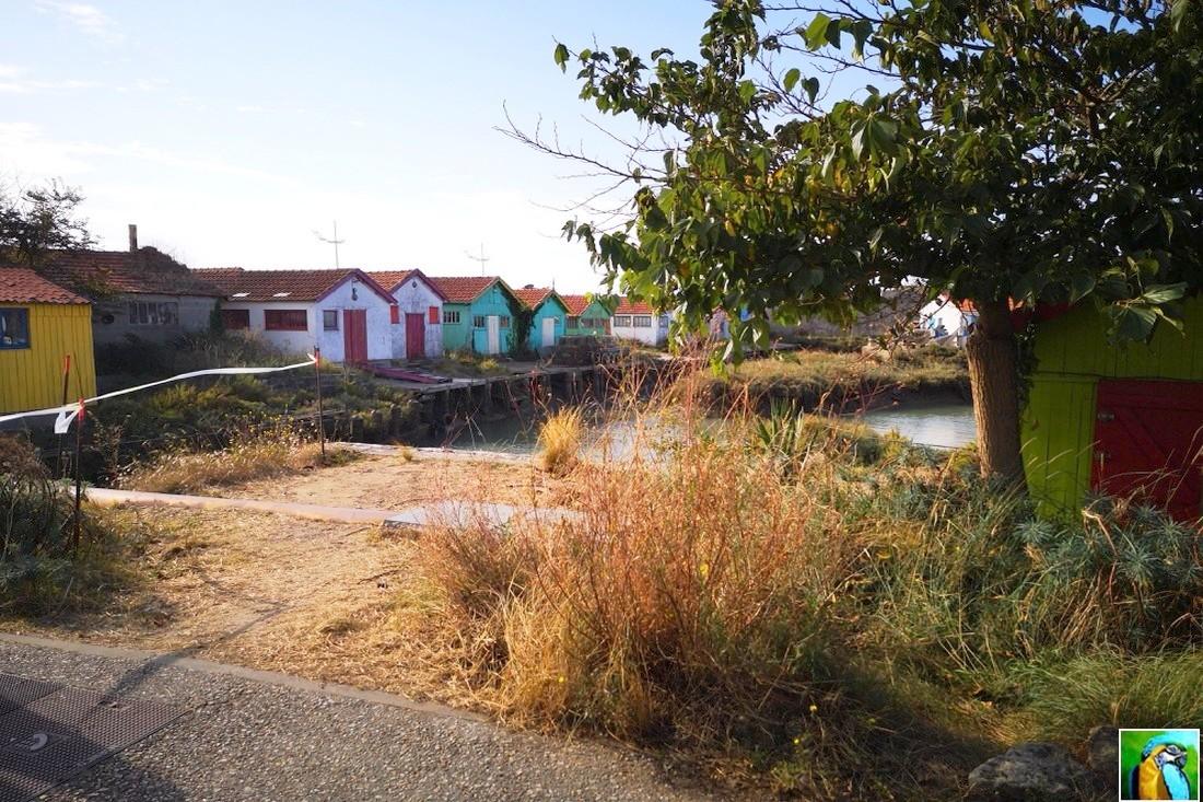 Balade Île d'Oléron en septembre 2/4
