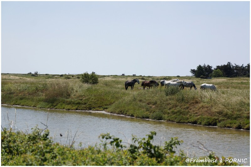 En balade dans le marais juin 2015