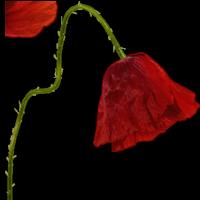 *** L'âme d'une fleur ***