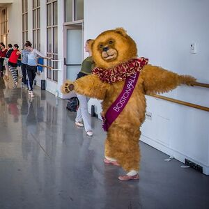 dance ballet dancing bear ballet nutcraker