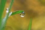 Gouttes d'eau sur une feuille verte (2)