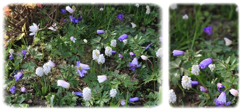 Un tapis de fleurettes