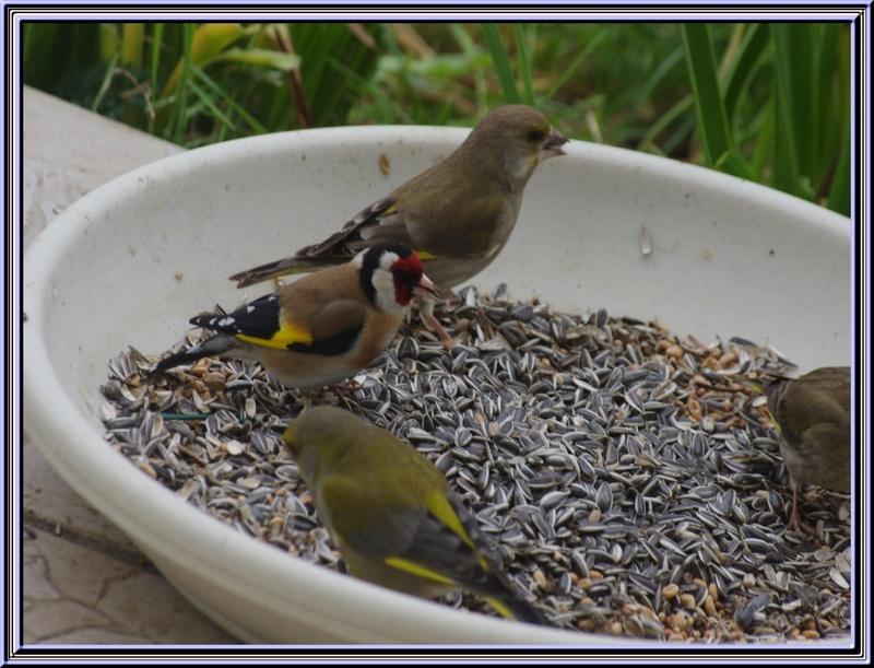 Des oiseaux.........,des petits et des grands