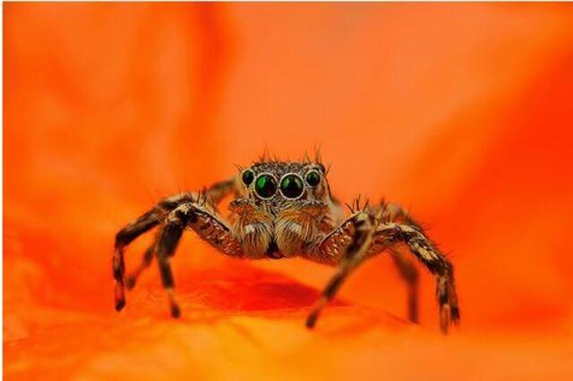 Les incroyables araignées de Jimmy Kong araignees macro