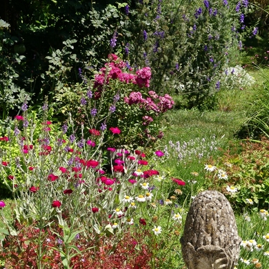 Mi-juin dans le grand jardin...