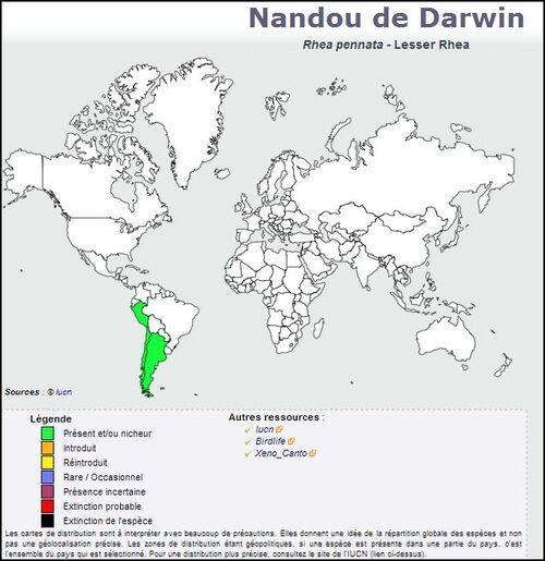 Nandou de Darwin - Rhea pennata - Lesser Rhea