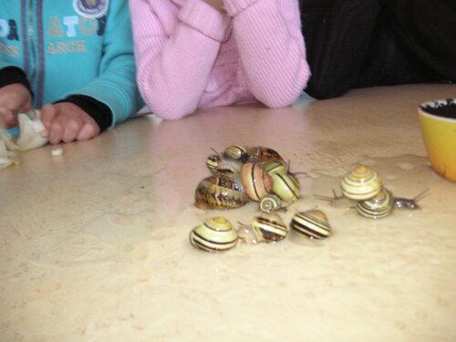 Des escargots en classe de CP
