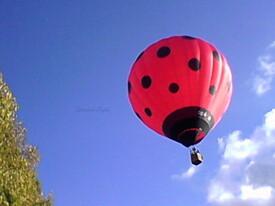 Une jolie montgolfière coccinelle