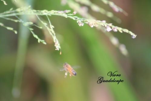 jardin-3589.jpg