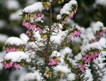 La_neige_099