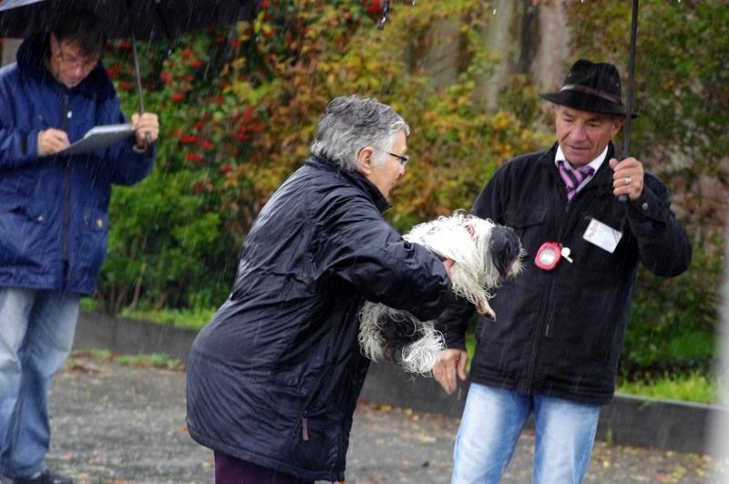 """le concours  """"très mouillé """" de St Sauveur d'Aunis du 18 novembre 2012"""