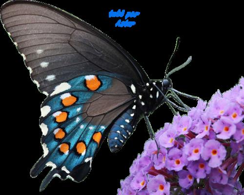 Tube 17 Papillon