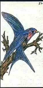 27 - l'oiseau