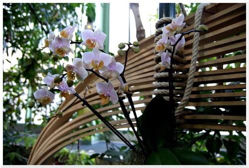 Exposition Orchidées 2016 suite.