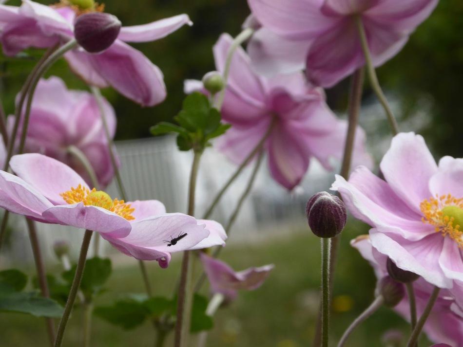 Encore des cyclamens sauvages et autres fleurs.