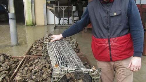 les huitres Hélie à Saint-Vast-la-Hougue (