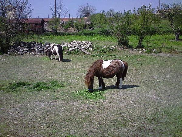 800px-Pony Enevo 2