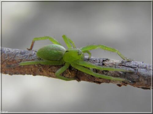 Quelques petites araignées