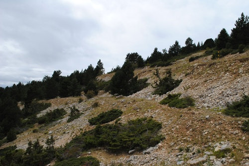 Promenade (en voiture) au Mont Ventoux
