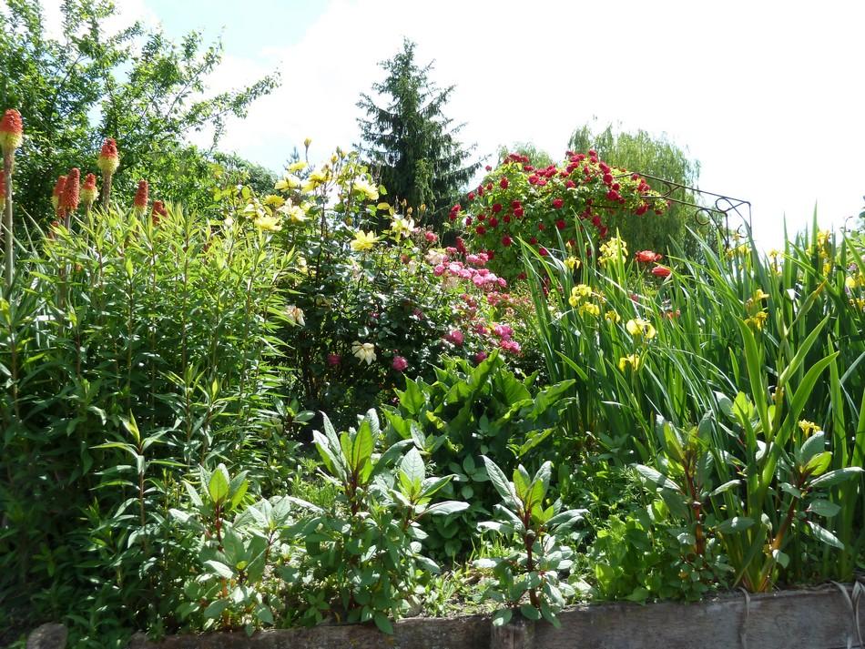 Les Hortillonnages (2)