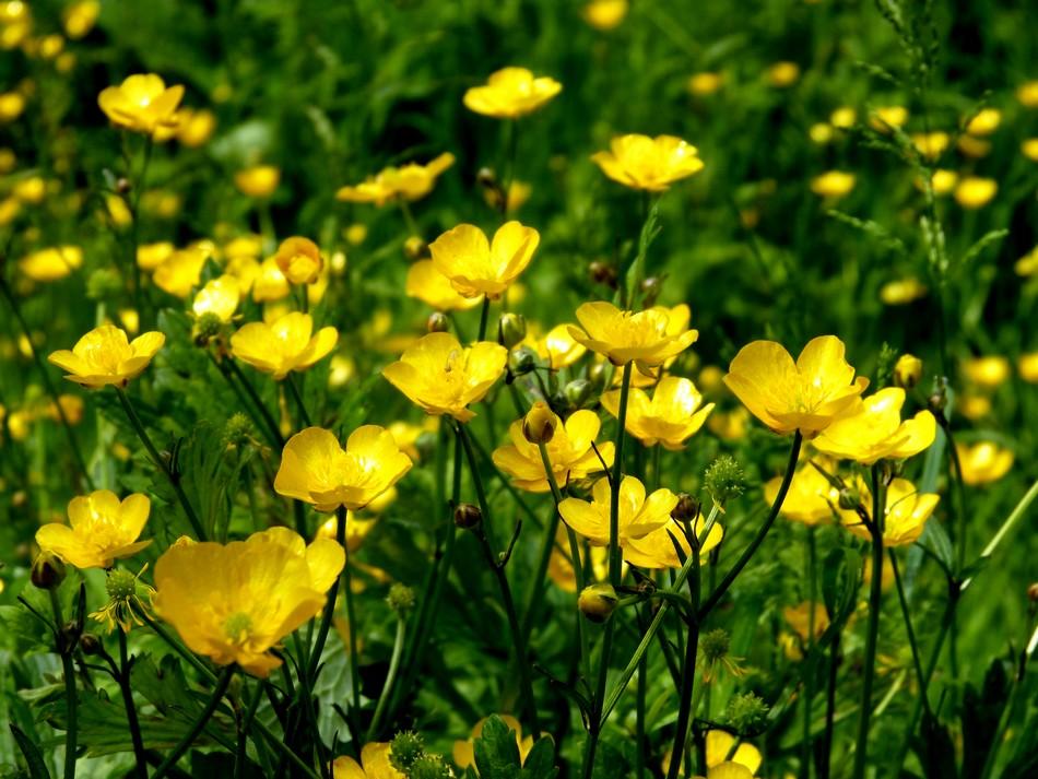 Fleurs devenues immortelles.