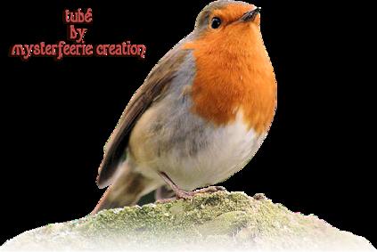 Oiseaux,rouge-gorge