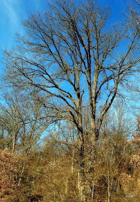 w03 - arbre et haie