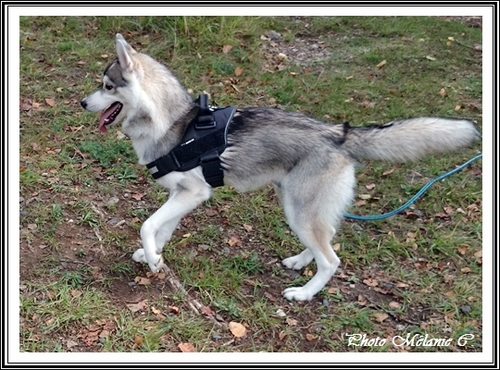 Keyko (7 mois)