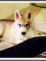 Leska (2 mois)