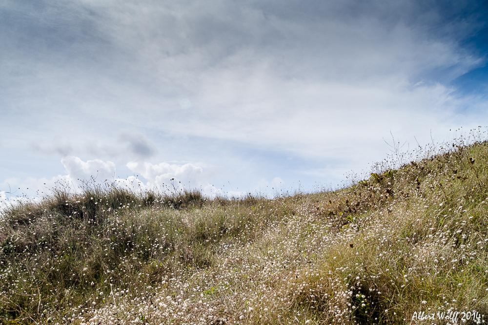 Bretagne 2014 - Fleurs et plantes - 2 -